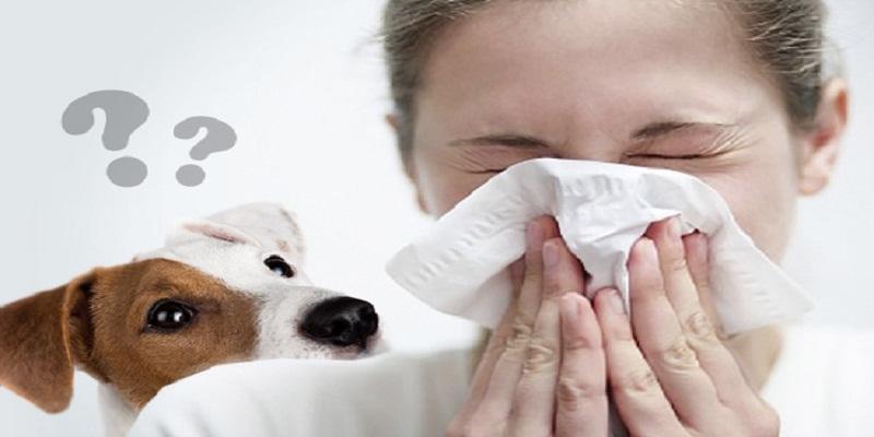 Собаки та кішки, які не викликають алергію у людей