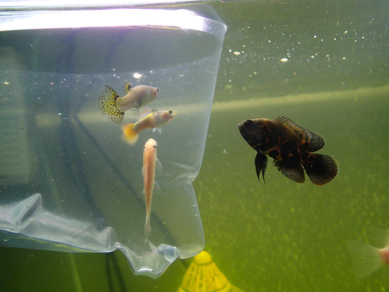 addfish.jpg (331.8 Kb)