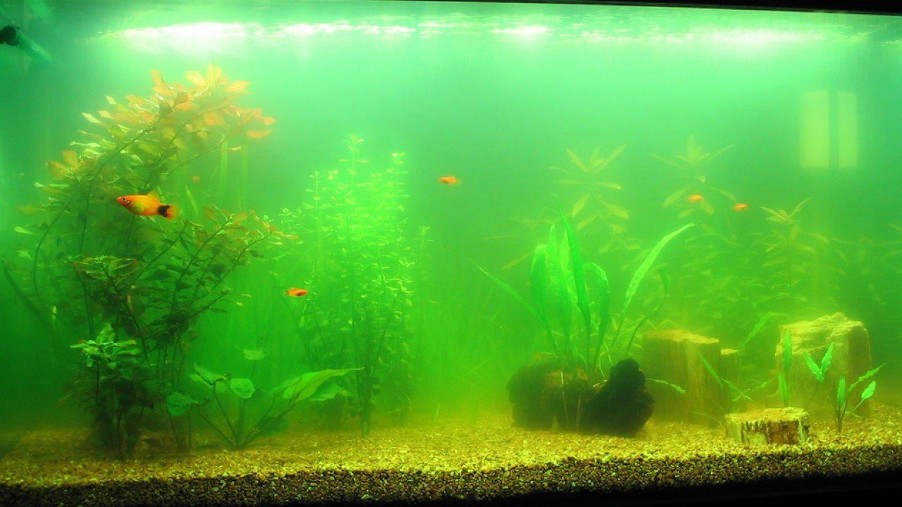 Шість основних помилок акваріумістів-початківців
