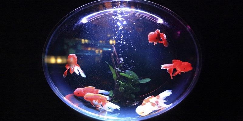 akvarium1.jpg (101.58 Kb)