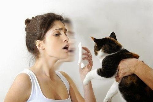 allergiya-na-koshek.jpg (21.79 Kb)
