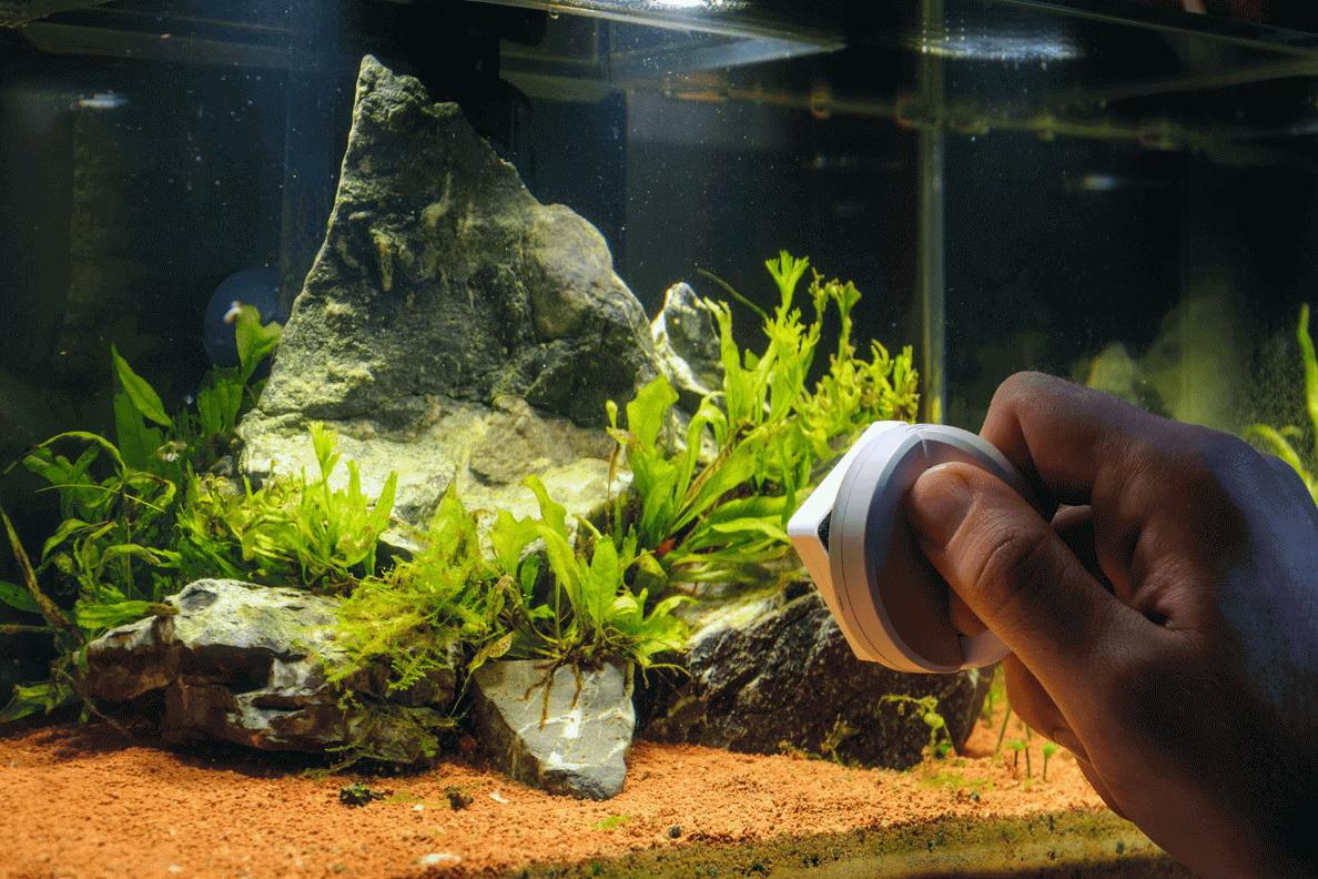 Що потрібно для акваріума?