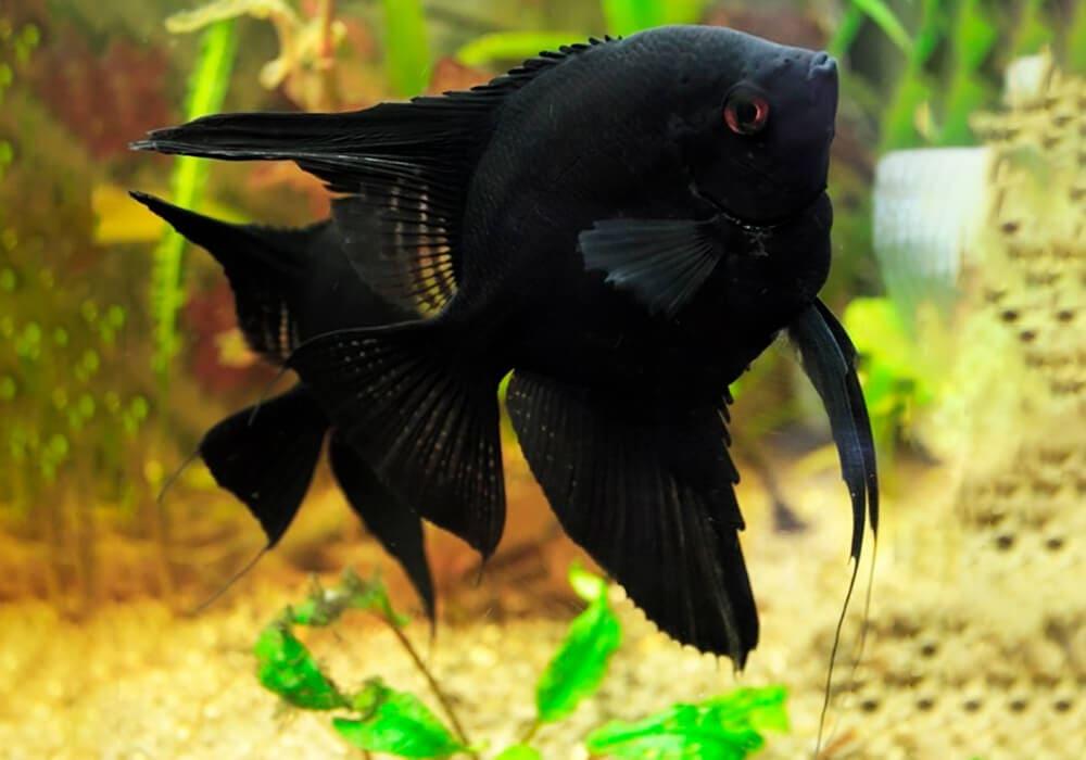 black.jpg (58.09 Kb)