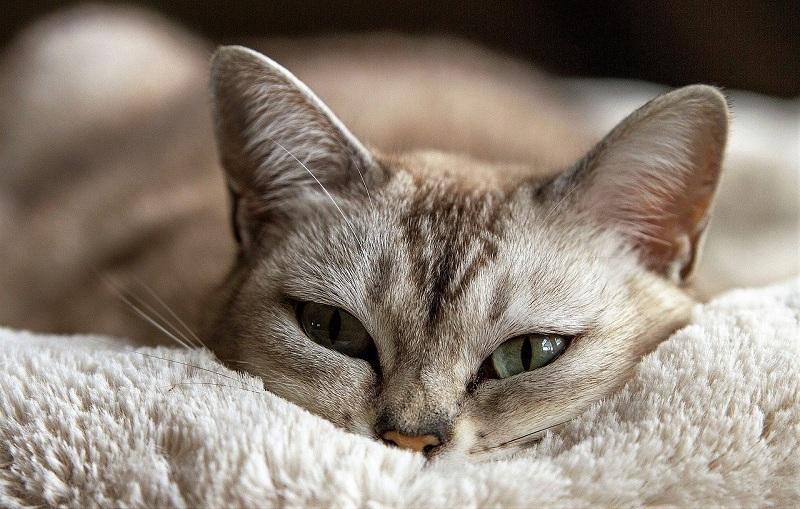 cat-1978356_1280.jpg (187. Kb)