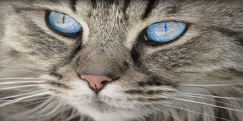 Догляд за шерстю кішки
