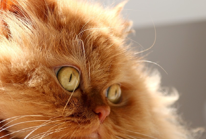 cat1.jpg (163.09 Kb)