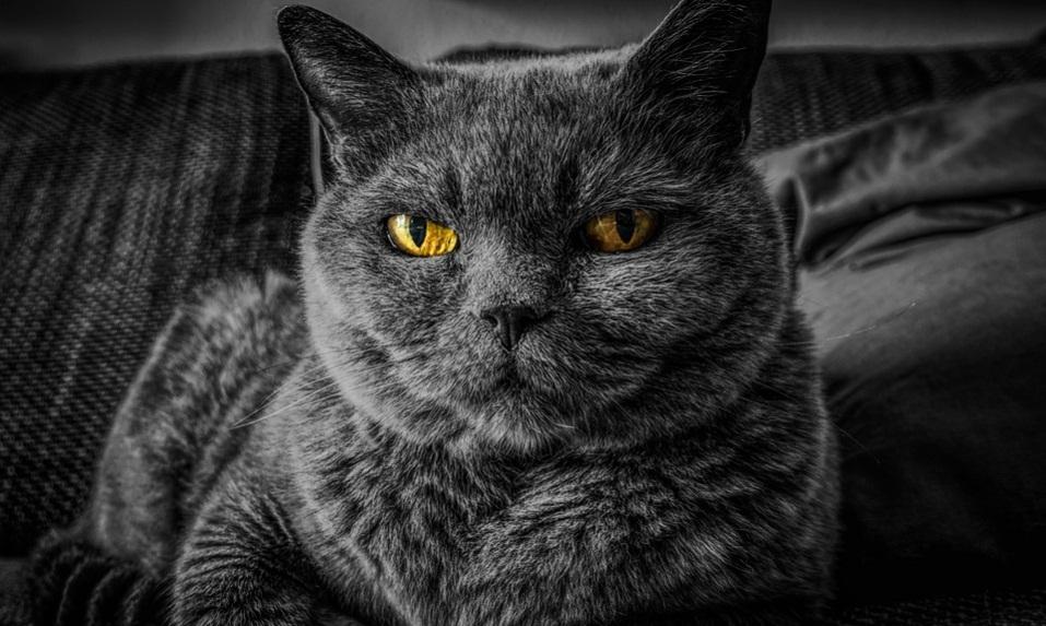 cat2.jpg (186.61 Kb)