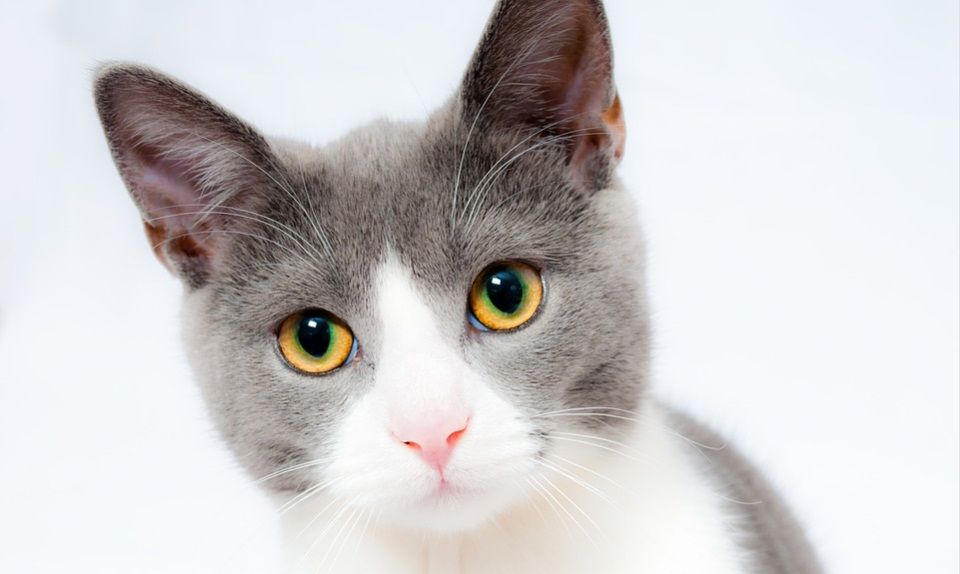 cat3.jpg (97.74 Kb)