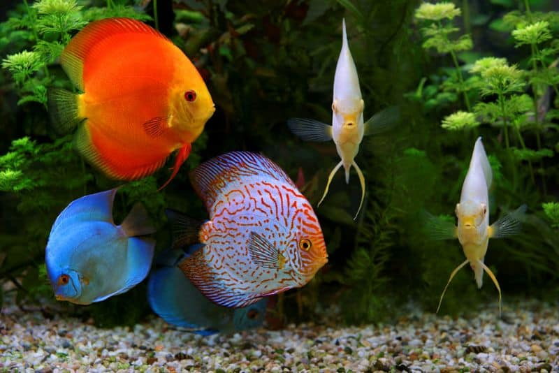 Королі акваріума – дискуси