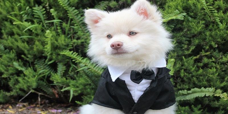 Топ 10 мініатюрних собак у світі