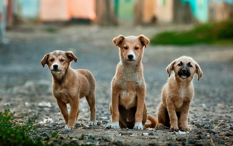 dogs-984015_1280.jpg (180.82 Kb)