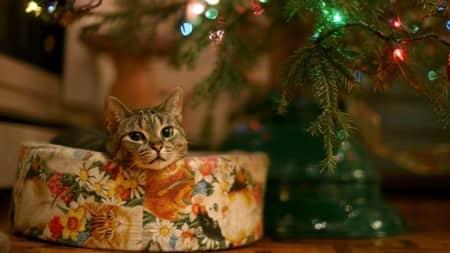 Домашні улюбленці в новорічну ніч в Естонії будуть спати спокійно