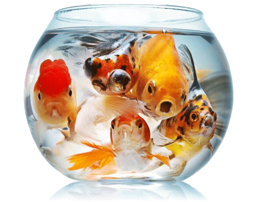 Чому вмирають рибки в акваріумі?