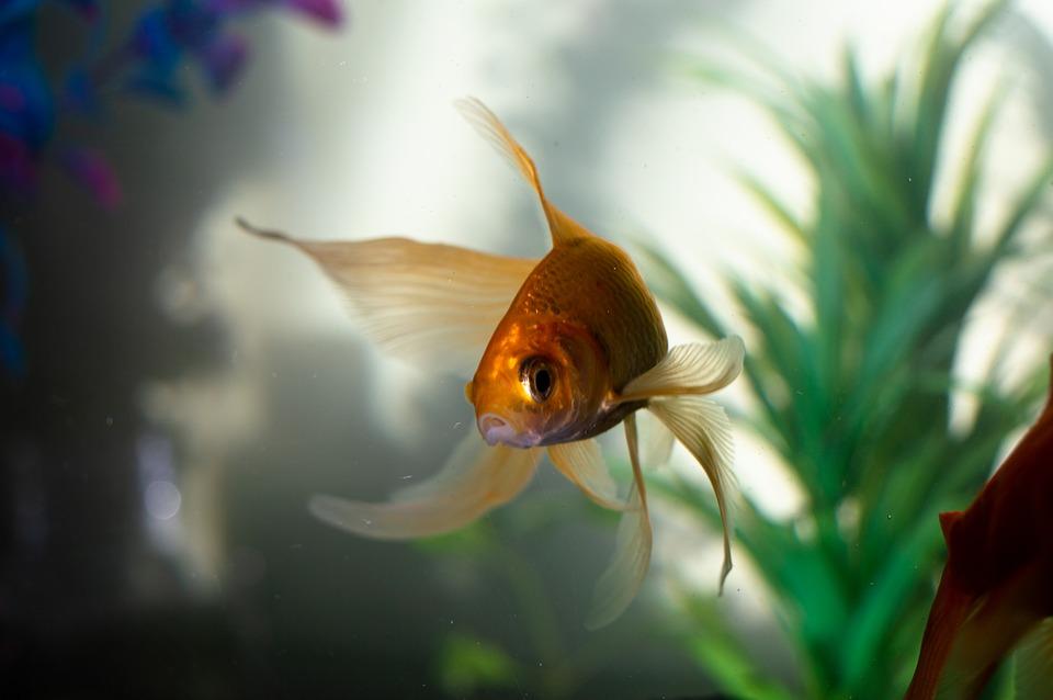fish_2.jpg (78.17 Kb)