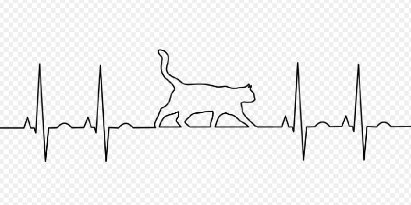 Медична аптечка для котів: що необхідно мати для першої допомоги?