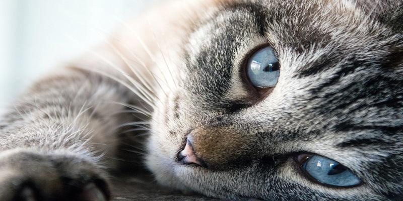 Котячий гороскоп: який улюбленець підійде Вам по знаку зодіаку? ( Частина ІІ )