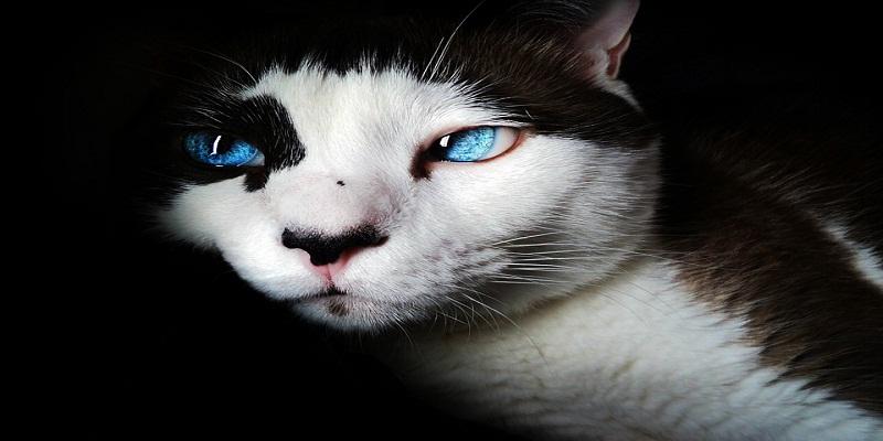 Котячий гороскоп: який улюбленець підійде Вам по знаку зодіаку? ( Частина І )