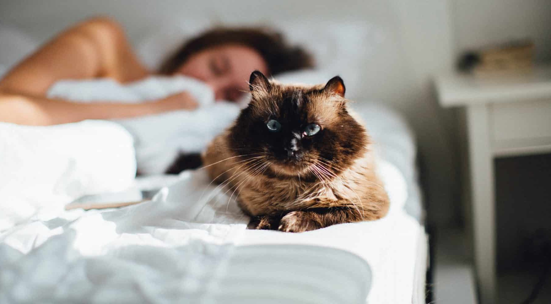 Як кішки захищають будинок і його мешканців від негативної енергії?