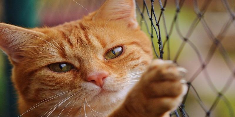 Як правильно стригти кігті у кішки?