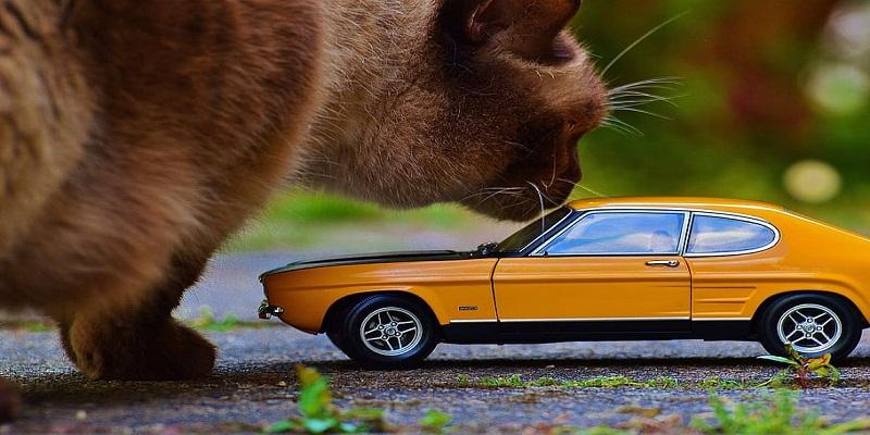 Як без стресу перевезти кішку в автомобілі?