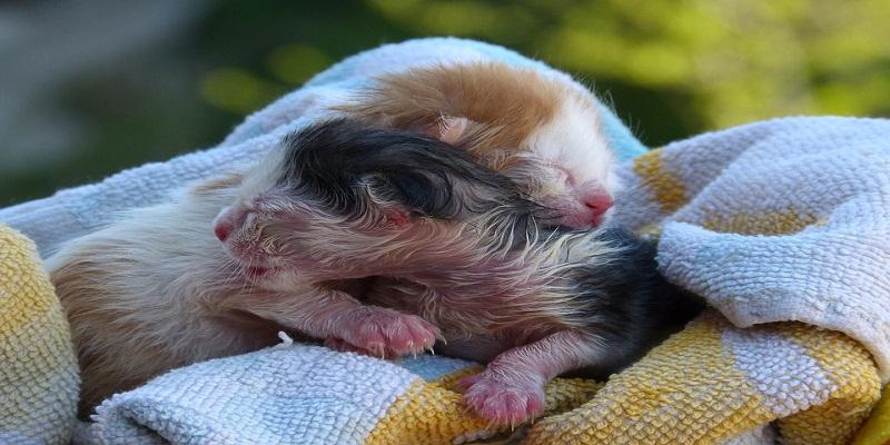 Коли новонароджені кошенята починають відкривати очі?