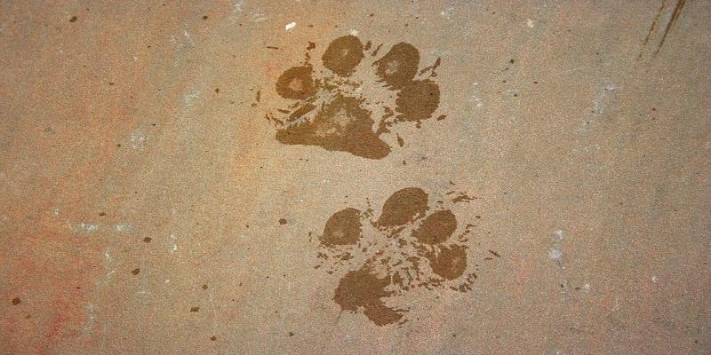 Як привчити собаку до миття лап?
