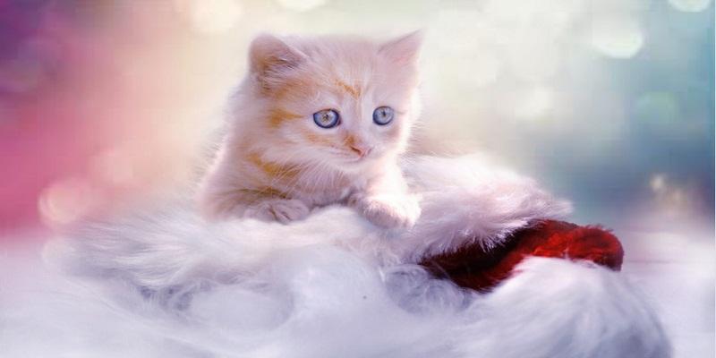 Линька у котів - причини