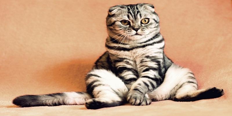 Як відучити кота мітити територію?