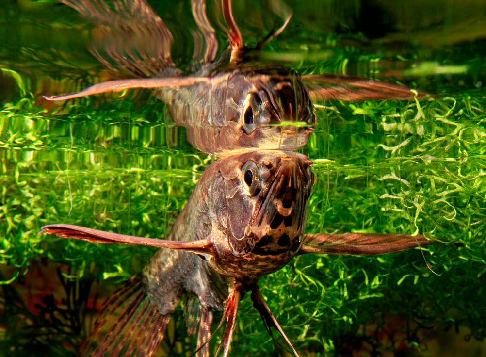 Топ-10 найдивніших акваріумних рибок