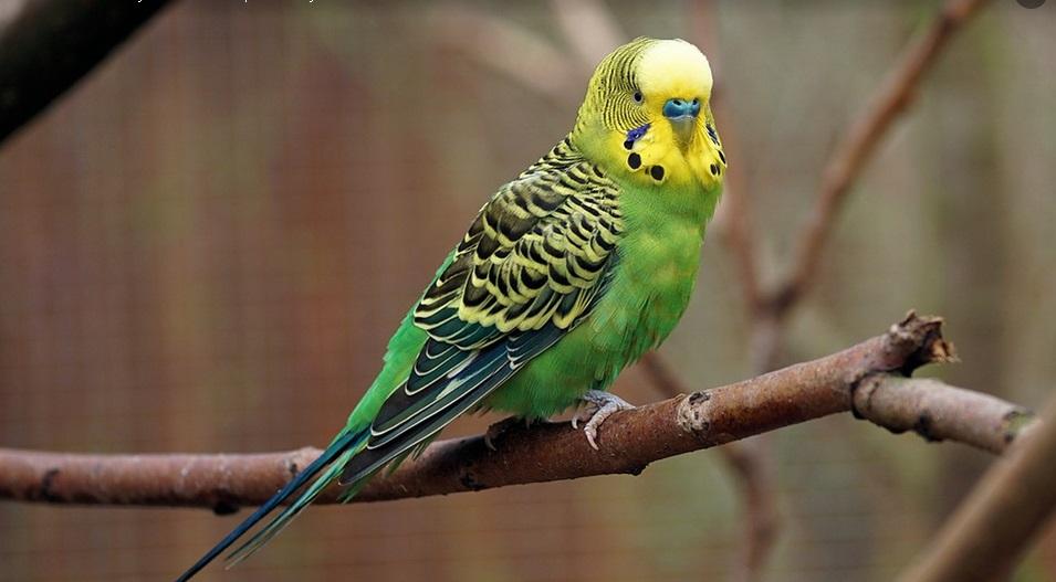 papuga_2.jpg (112.17 Kb)