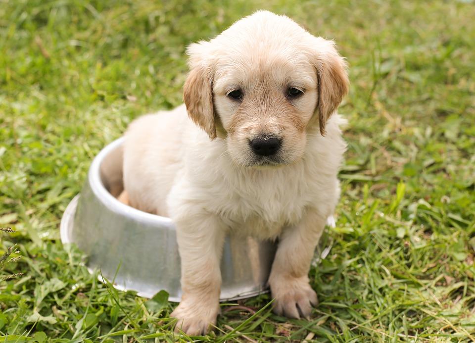 puppy-1207816_960_720.jpg (169.79 Kb)