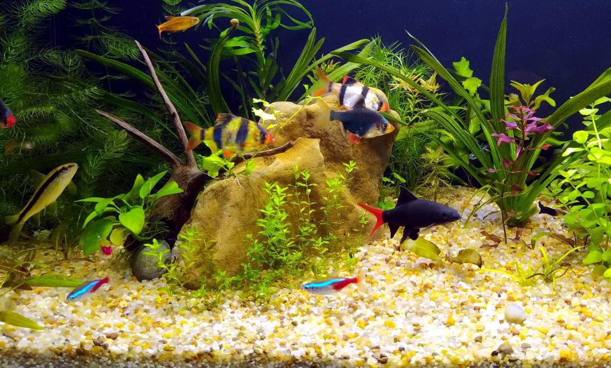 Акваріумні рибки. Назви