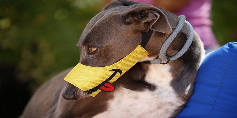 Як привчити собаку до намордника?