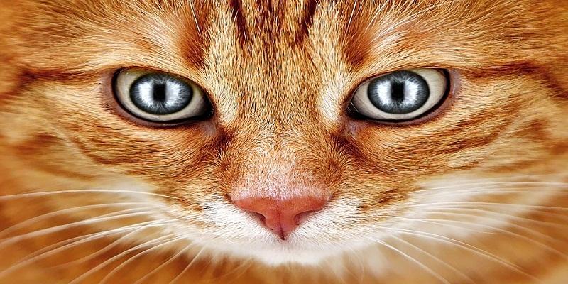 Світіння котячих очей у темряві