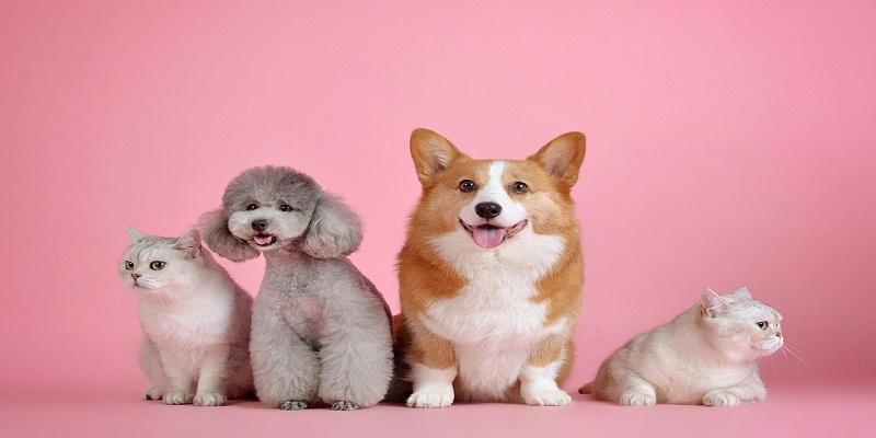 Топ-5 собак, які чудово ладнають з дітьми