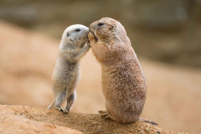 Мова тварин: як звірі комунікують між собою