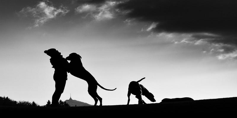 Як знайти взаємопорозуміння  з собакою?