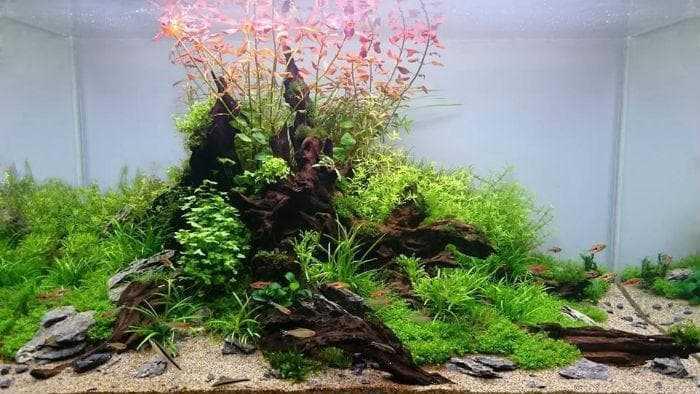 Перший запуск акваріума: крок за кроком